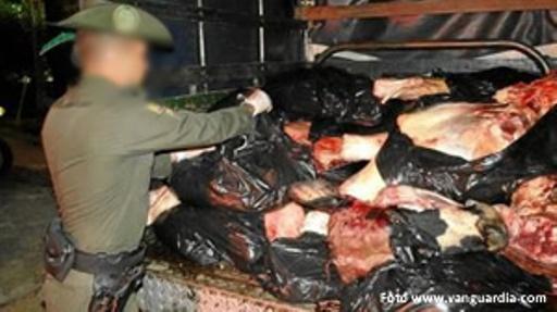 carne de chiguiro