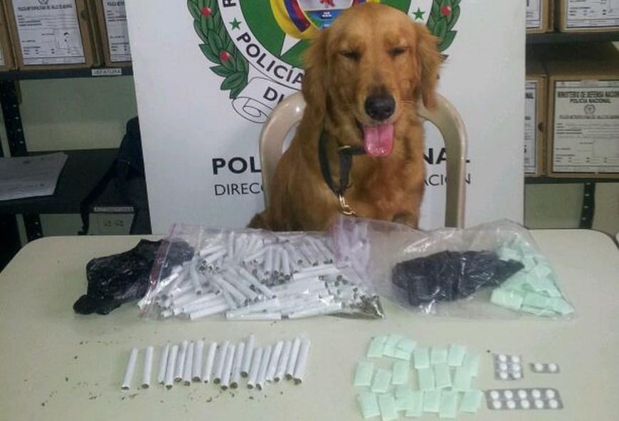 La perra Marha con los cigarrillos de marihuana incautados. Foto: Cortesía