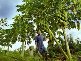 Este sábado inicia la celebración a los campesinos de Colombia