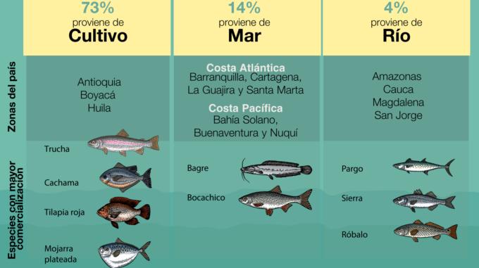 Pescado de cultivo en Colombia