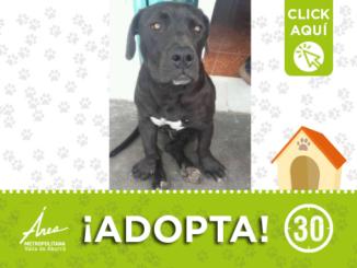 adopta16