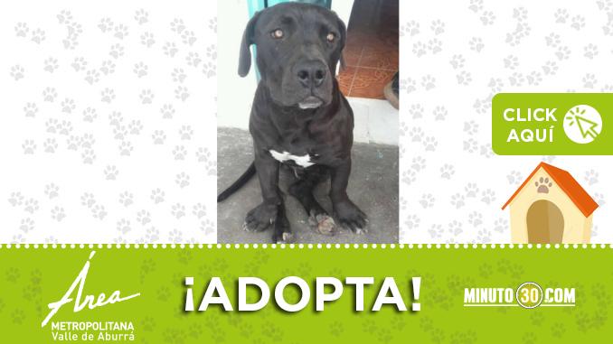 adopta7