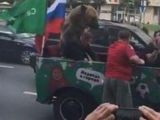 Oso show Rusia