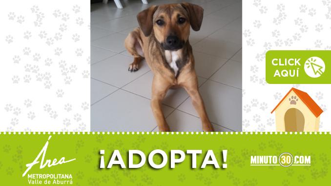 adopta19
