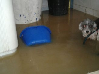Inundaciones en Apartado 1