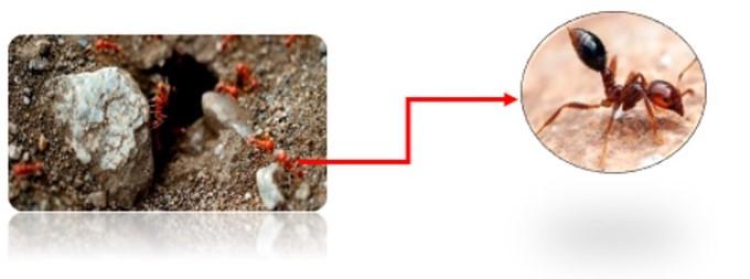 hormigas1