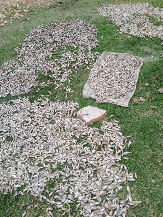 Mortandad peces fuquene