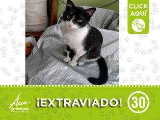 gatodest3
