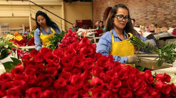exportacion flores colombia estados unidos san valentin