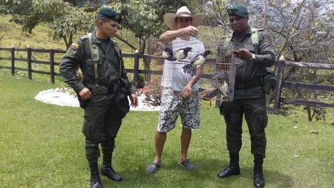 En Bello, Antioquia, las autoridades recuperaron diez especies de fauna silvestre