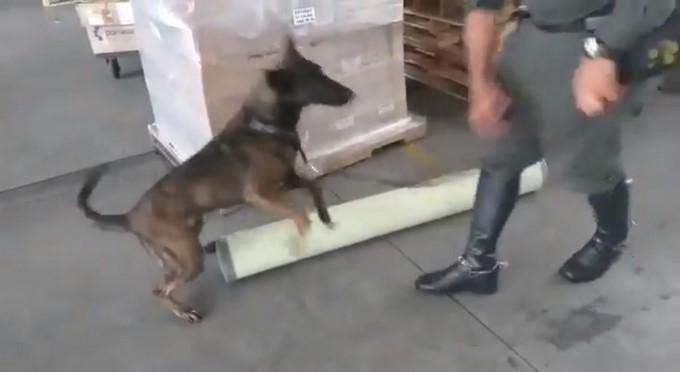 Perro encuentra droga dentro de tubos en Medellin