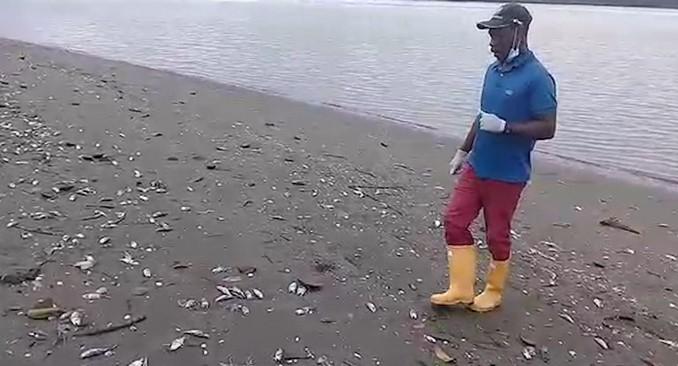 Peces muertos timbiqui cauca