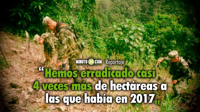 Ya van casi 32 mil hectareas erradicadas y todavia tenemos coca en Antioquia Gobernador