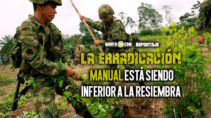 En 2019 se han erradicado m%C3%A1s de 14.100 hectareas de cultivos ilicitos en Antioquia