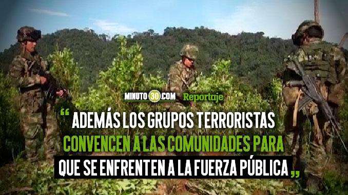 Incumplimientos del Gobierno a campesinos imposibilita la erradicacion de coca en el Bajo Cauca
