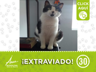 gato 8