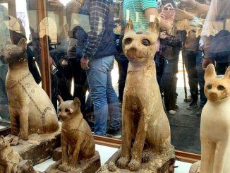 26 11 19 animales momificados egipto exposicion