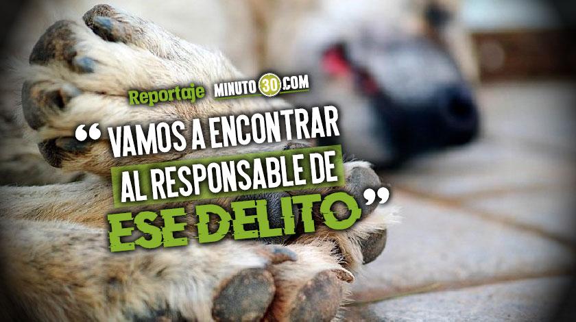 Avanza la investigacion del envenenamiento masivo de mascotas en el barrio Los Colores