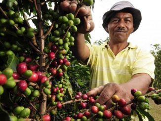 La producción de café en Colombia retrocede un 3 % en agosto