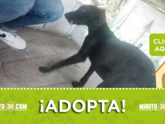 adopcion1 1
