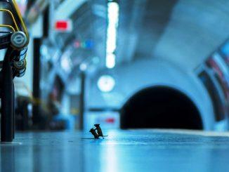 pelea ratones metro
