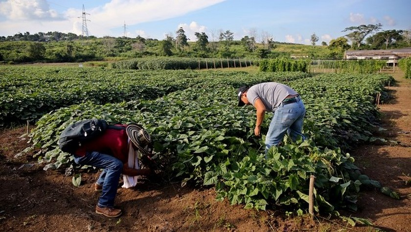 medio ambiente agricultura colombia campo
