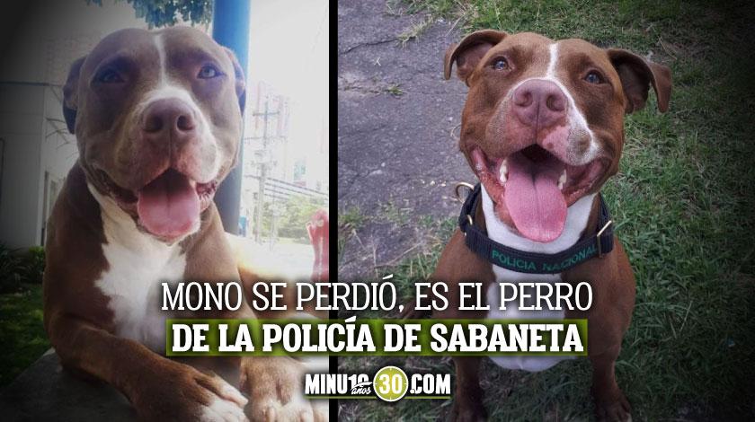 Mono perro Policia de Sabaneta perdido la comunidad lo busca