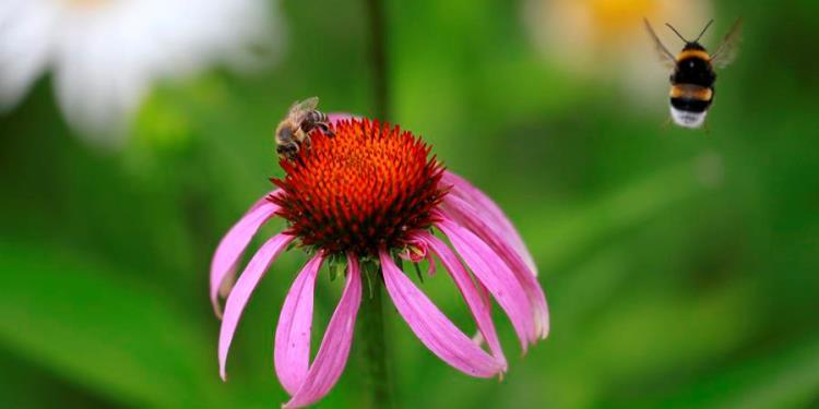insectos abejas flores polinizacion