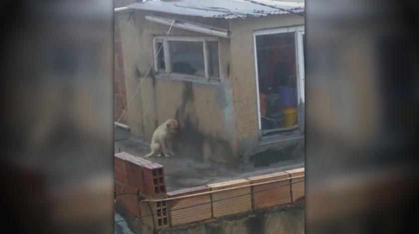 La triste foto de un perrito abandonado en un patio ante la inclemente lluvia en Bogota