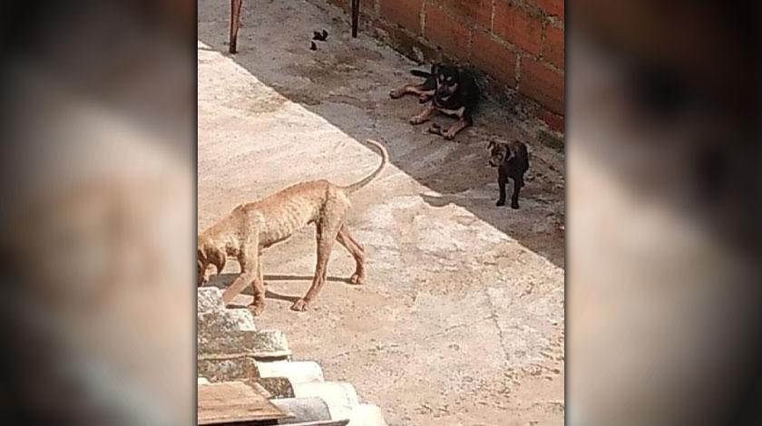 perros maltratados