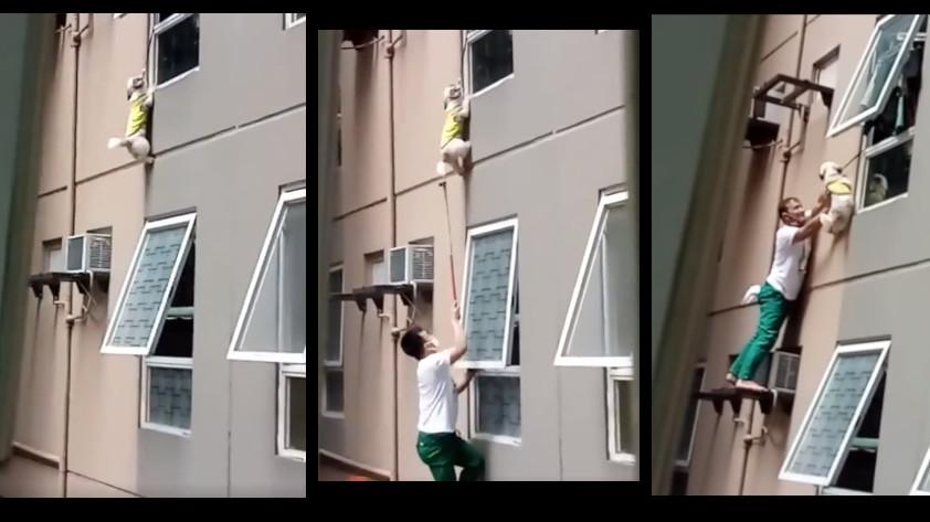 perro colgando ventana