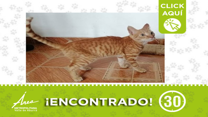 Buscan a la familia de este gatico encontrado en Robledo