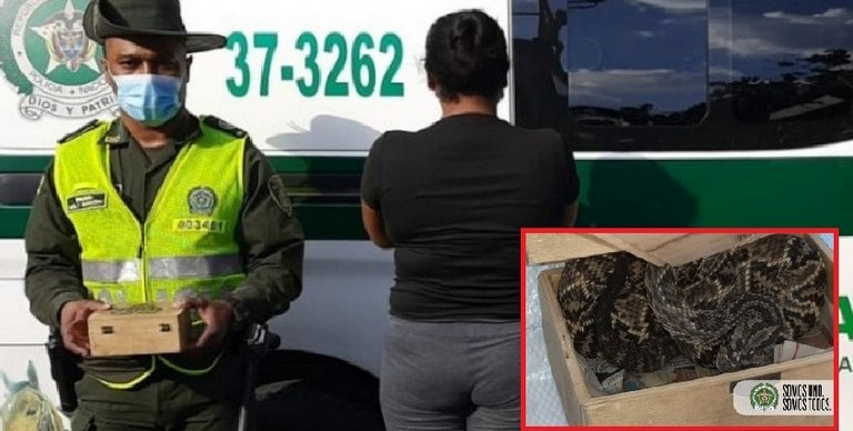 Mujer capturada con serpiente cascabel
