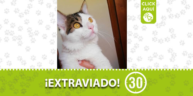 copacabana gato