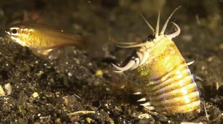 fondo del mar gusanos gigantes