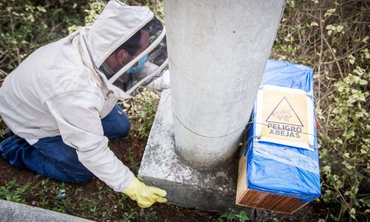 Durante la temporada seca aumenta la aparición abejas y avispas en Medellín