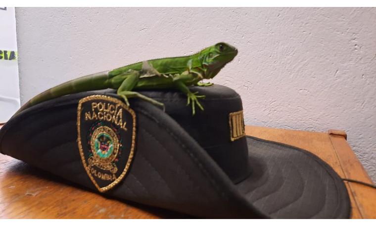 En Medellín, un ciudadano entregó este animalito a la Policía para que fuese regresado a su hábitat