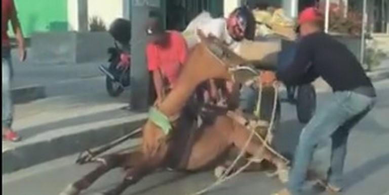 Caballo maltratado en Santa Marta