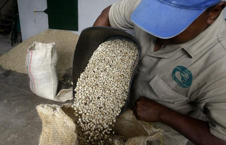 Colombia espera producir seis millones de sacos de café en el primer semestre