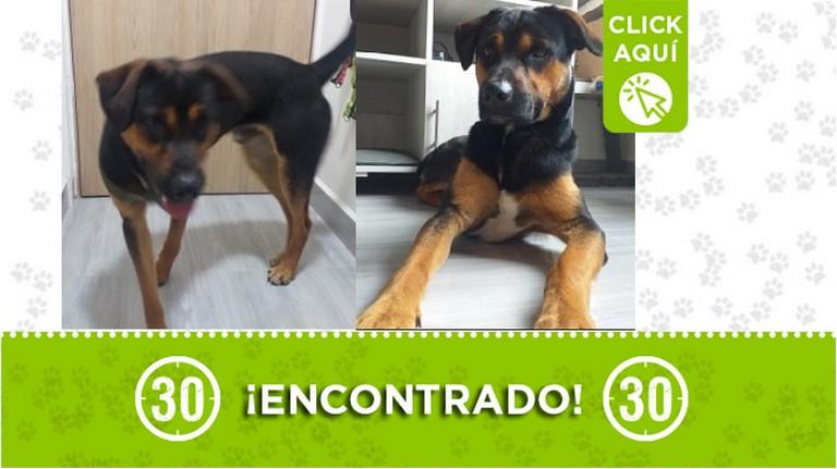 Perrito encontrado en Buenos Aires