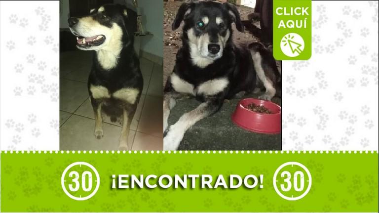 Perrito encontrado en Itagüí