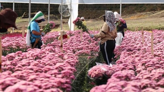 Se acerca la celebración de San Valentín y Antioquia se prepara para exportar más de 180 millones de flores