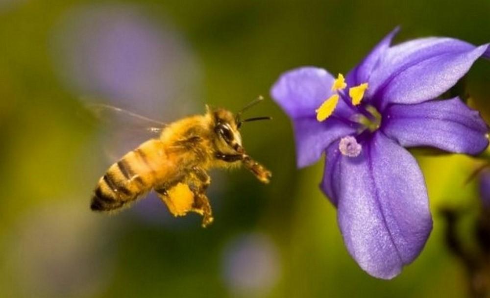 ICA suspende insecticida que mata abejas