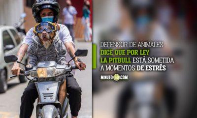 Natacha, la perrita que maneja moto