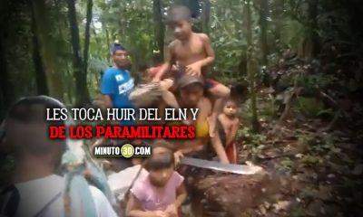 Que tristeza Con sus gallinas en las manos indigenas estan siendo desplazados en Antioquia