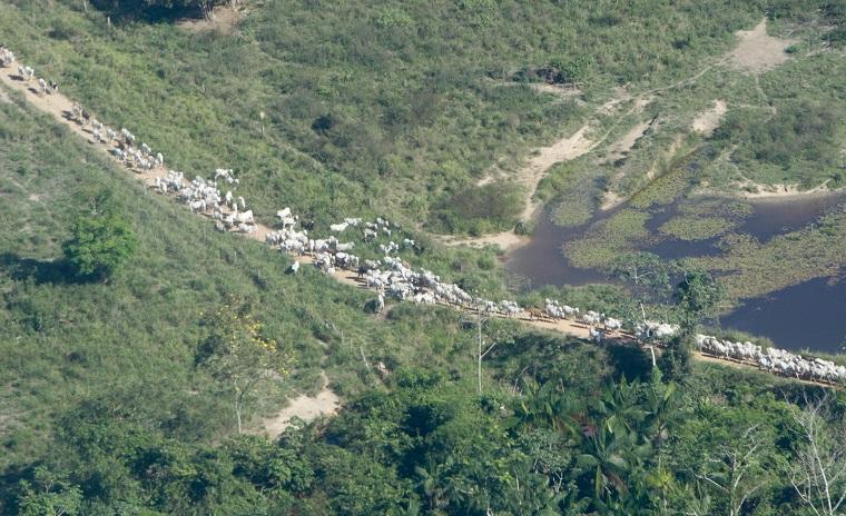 Siete de las diez ciudades de Brasil que más carbono emiten están en la Amazonía