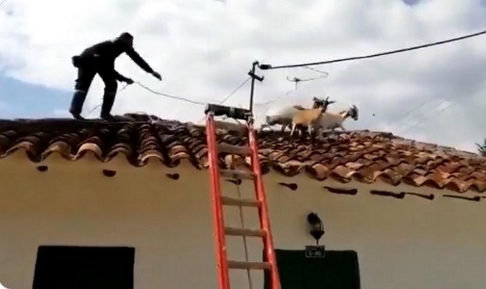 cabras santander