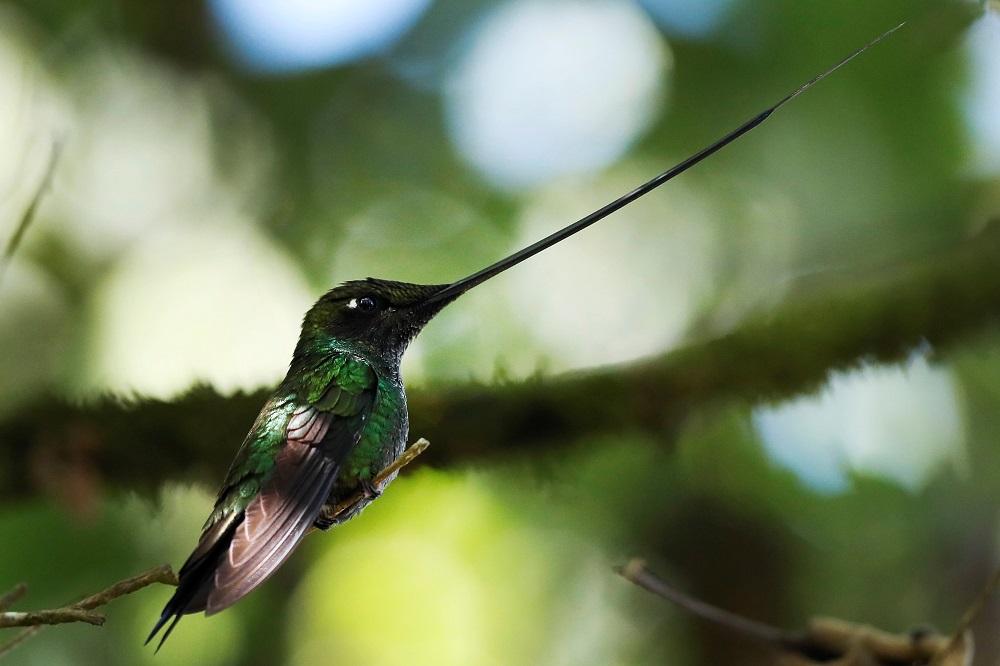 colibries en cerro monserrate 1