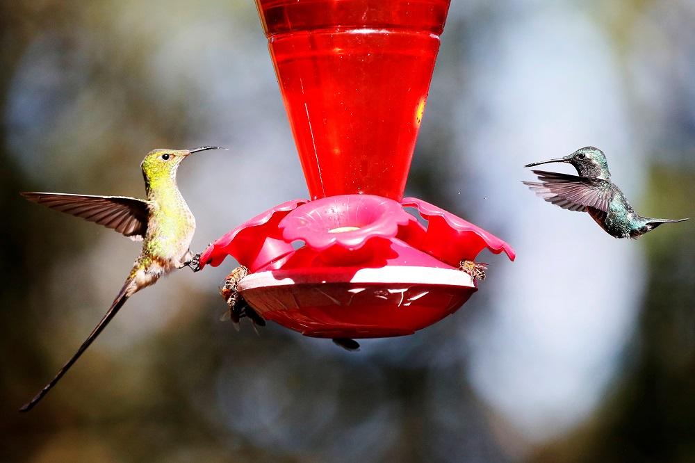 colibries en cerro monserrate 3