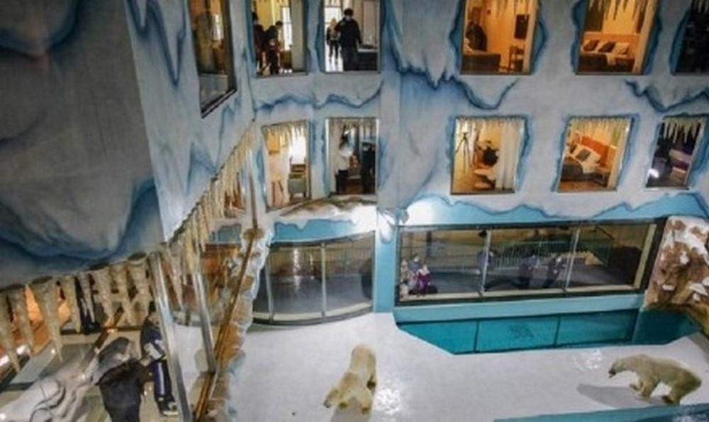 hotel exhibe osos polares